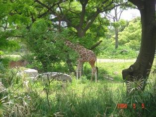 天王寺動物園③