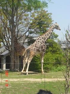 天王寺動物園⑤