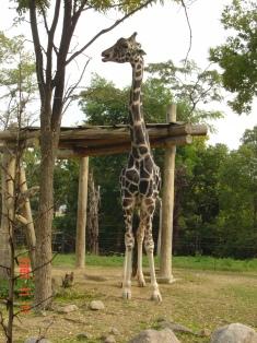 天王寺動物園⑦