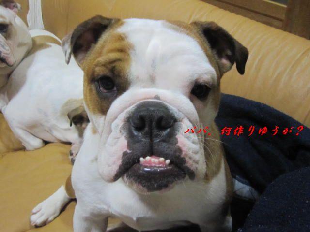 001_20111223180734.jpg