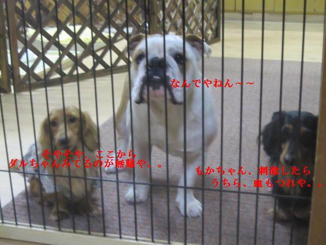 001_20120119202652.jpg