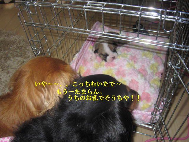 003_20120126202042.jpg