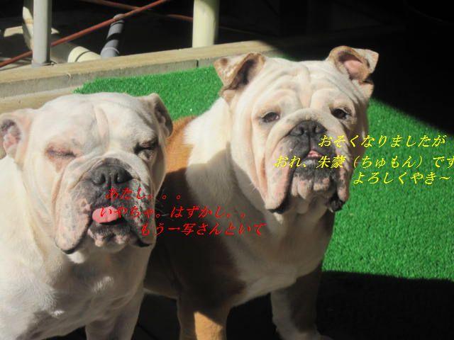 004_20120112173815.jpg