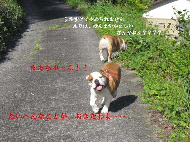 004_20120430071412.jpg