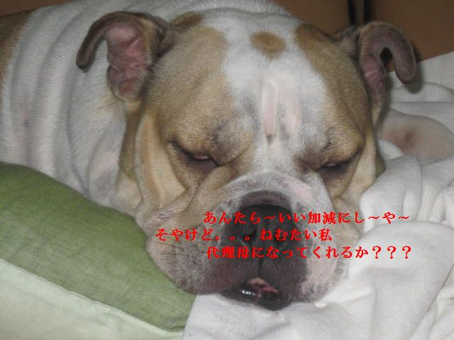 005_20120126202751.jpg