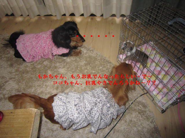 010_20120126202632.jpg