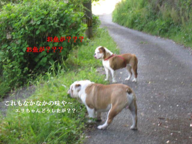 014_20120430071118.jpg