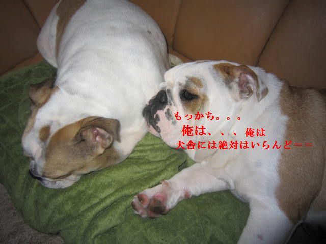 015_20120118174332.jpg