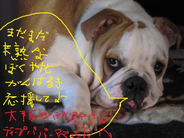 016_20111211154757.jpg