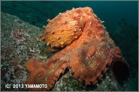 yamamoto07.jpg
