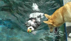 泳ぐあず&泳げない恵空
