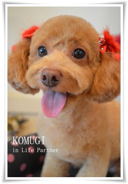 komugi2_9_5.jpg