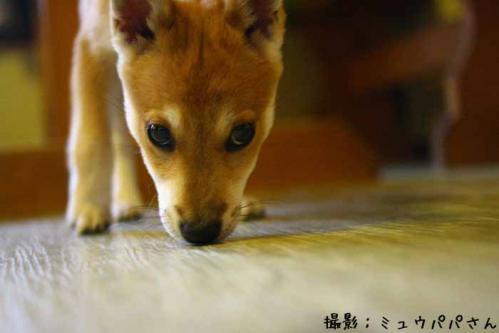 IMG_7944_16+AZUKI.jpg