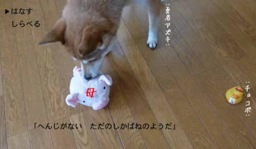 P1110552+AZUKI.jpg