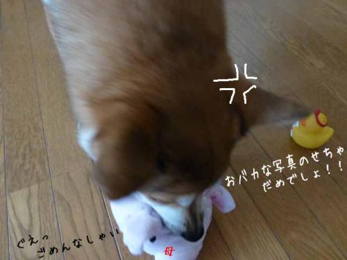 P1110554+AZUKII.jpg