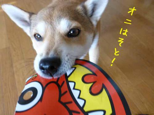 P1110768+AZUKI.jpg