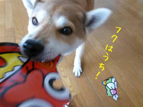P1110770+AZUKI.jpg