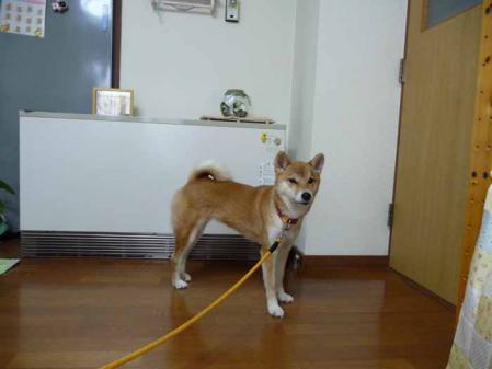 P1190996-AZUKI.jpg