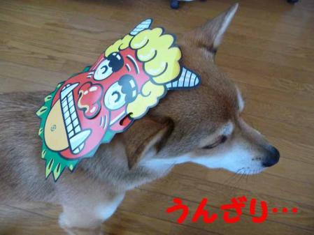 P1210184-AZUKI.jpg