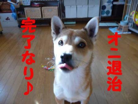 P1210209-AZUKI.jpg