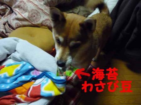 P1210238-AZUKI.jpg