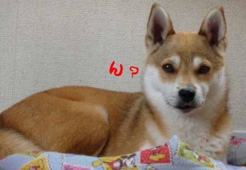 P1260203-AZUKI.jpg