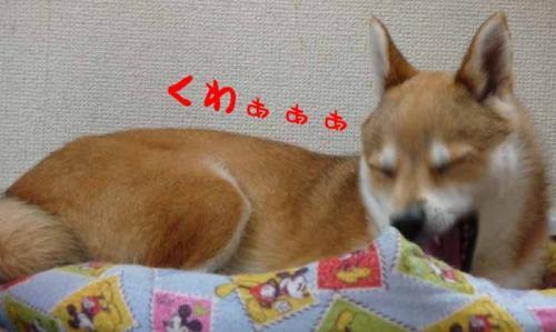 P1260207-AZUKI.jpg