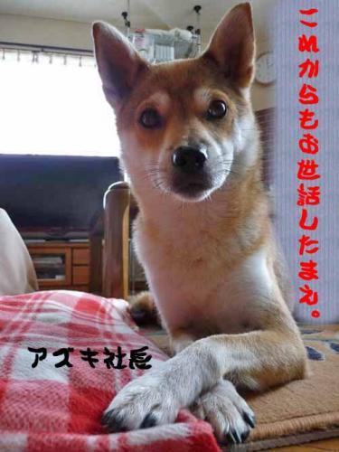P1280832-AZUKI.jpg