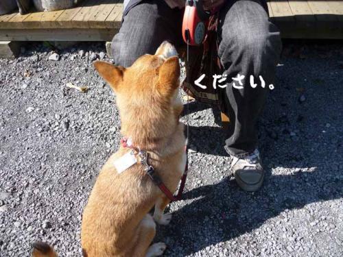 P1290063-AZUKI.jpg