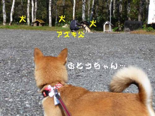 P1290078-AZUKI.jpg