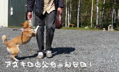 P1290089-AZUKI.jpg