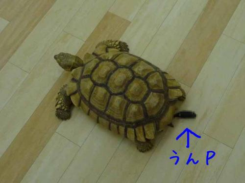 P1290389-AZUKI.jpg