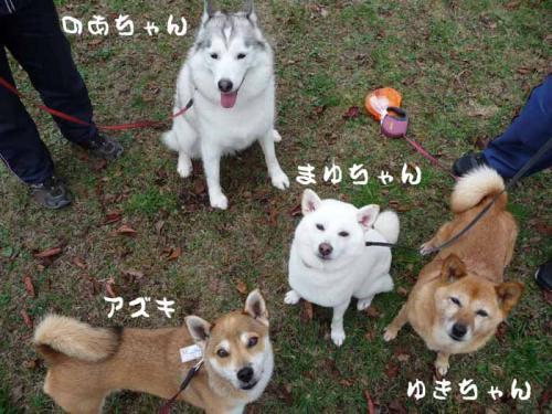 P1290951-AZUKI.jpg