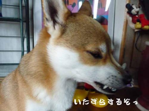 P1300051-AZUKI.jpg