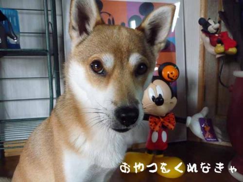 P1300052-AZUKI.jpg