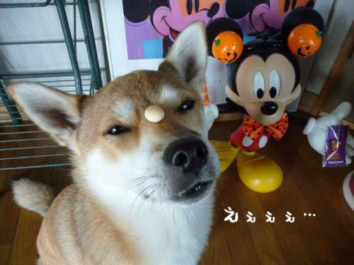 P1300054-AZUKI.jpg