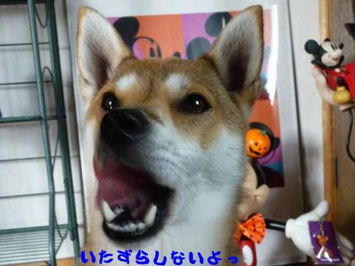 P1300058-AZUKI.jpg