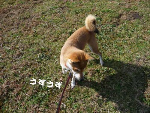 P1300384-AZUKI.jpg