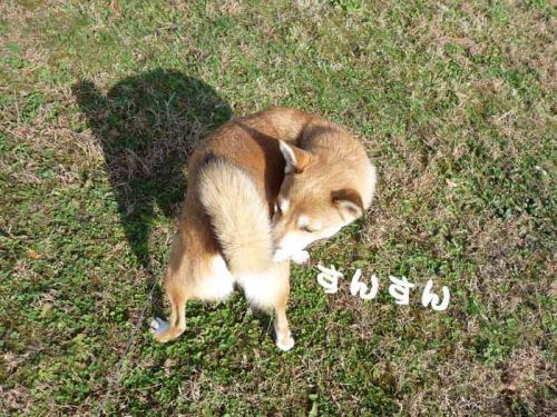 P1300394-AZUKI.jpg