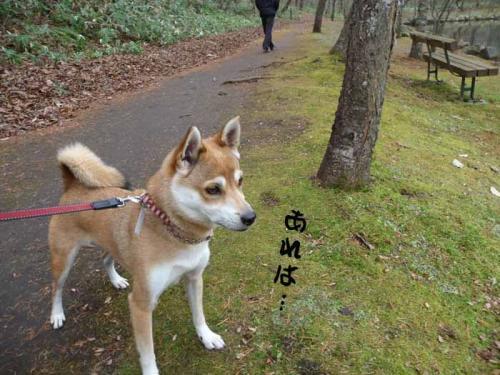 P1300593-AZUKI.jpg