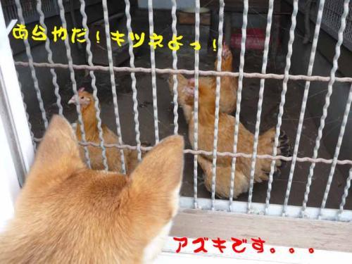 P1300607-AZUKI-.jpg