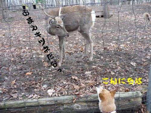 P1300613-AZUKI.jpg