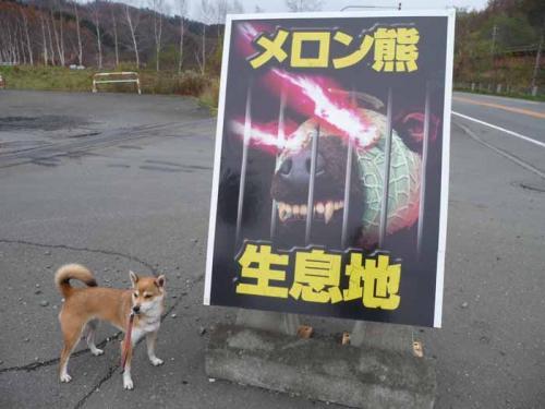 P1300743-AZUKI.jpg