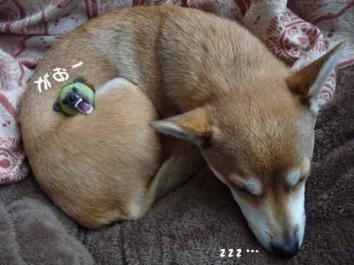 P1300868-AZUKI.jpg