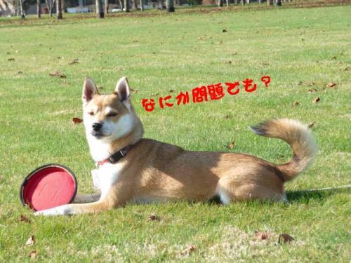 P1310020-AZUKI.jpg