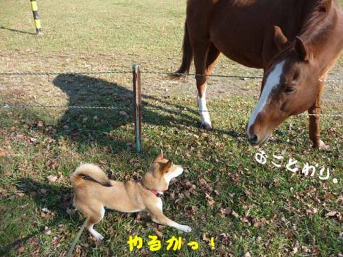 P1310102-AZUKI.jpg