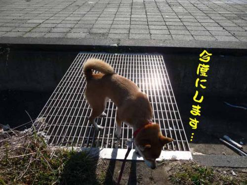 P1310137-AZUKI.jpg