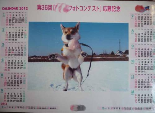 P1310166-AZUKI.jpg