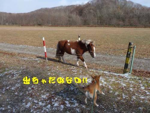 P1310225-AZUKI.jpg