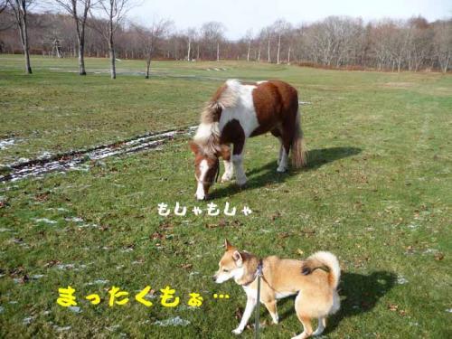 P1310228-AZUKI.jpg